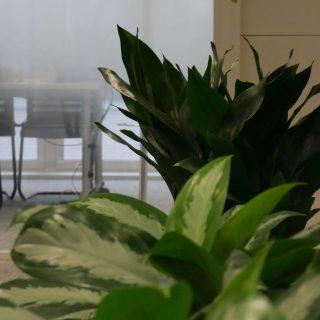 Location plantes vertes bureaux entreprise