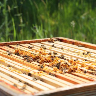 Animation & Formation - abeilles