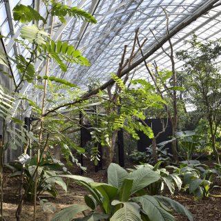 Grande serre tropicale du zoo de Paris à Vincennes ®Juliette BERNY