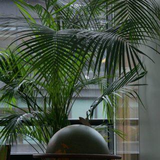 SCHNEIDER ELECTRIC - LOCATION DE PLANTES VERTES