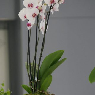 SCHNEIDER ELECTRIC COUPE D'ORCHIDEE