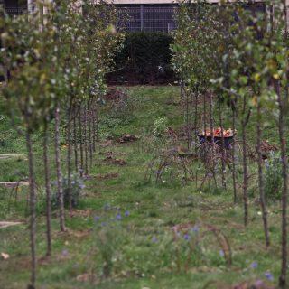 Jardin vivant carr suffren vertd co for Le jardin vivant