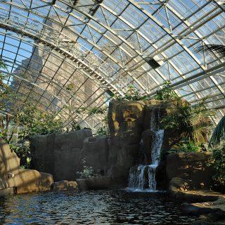 Grande serre tropical du zoo de Vincennes ® F-G Grandin MNHN