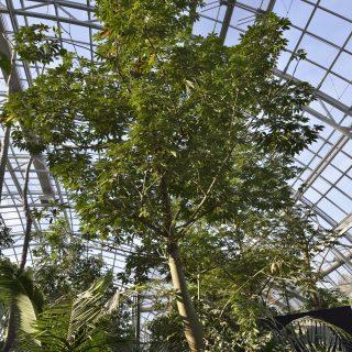 Grande serre tropicale du zoo de Vincennes