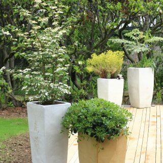 Jardin des magnolias -1