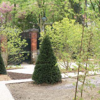 Jardin des magnolias -5